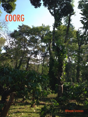 Pepper, Coorg