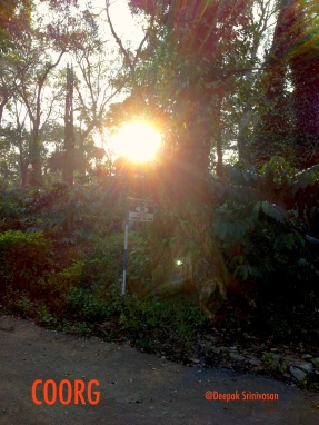 Sunrise at Tata Coffee Plantation, Coorg